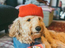 Humanizando a los perros