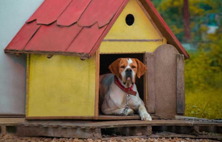 Entrenamiento de Caja perro