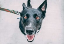Cómo evitar que su perro tire de la correa