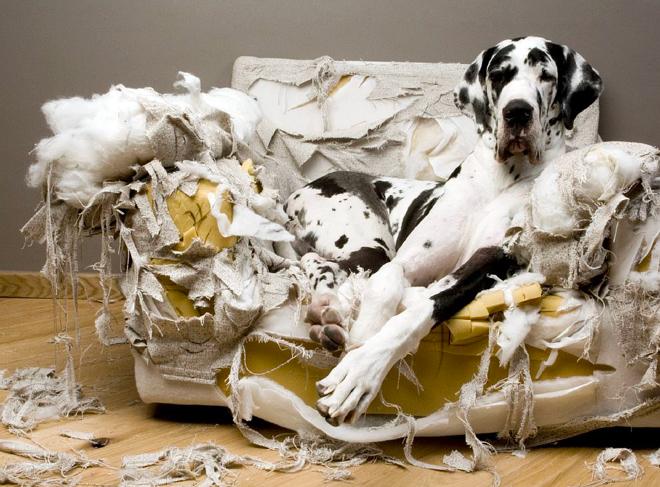 comportamiento destructivo del perro
