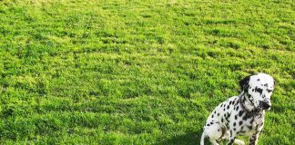 perros en el patio