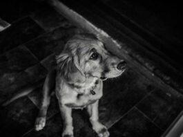perro durante las tormentas