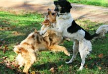 Como detener a un perro de ladrar a a otros perros