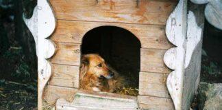 Como entrenar tu cachorro o perro a su caja!