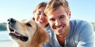 por qué es importante entrenar a los perros