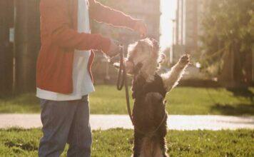 Premios caseros para perros